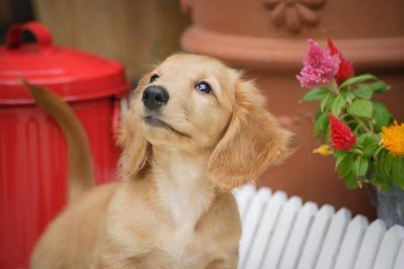 to sit: Puppy to sit
