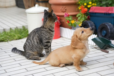 sit: Sit the puppy and cat