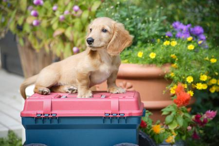 mammalian: Puppy to sit