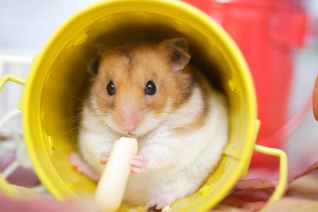 snack time: Hamster snack time Stock Photo