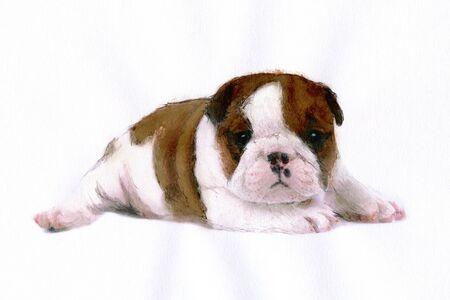 living organism: Bulldog