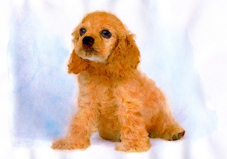 cocker: American Cocker Spaniel Stock Photo