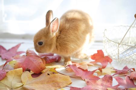 deciduous: Rabbit and deciduous