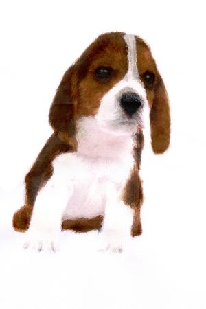 living organism: Beagle