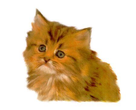 chinchilla: Chinchilla Gold