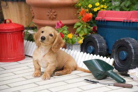 座っている子犬 写真素材 - 49373899
