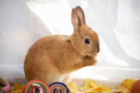 coma: Coma and rabbit of autumn