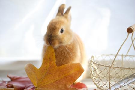 deciduous: Rabbit adding deciduous Stock Photo