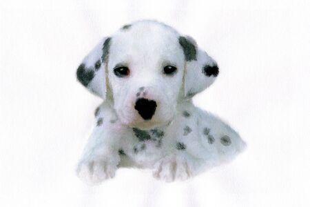 dalmatian: Dalmatian Stock Photo