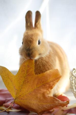 adding: Rabbit adding deciduous Stock Photo