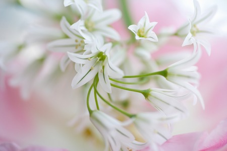 neatness: Allium