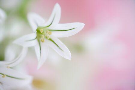 radiancy: Allium