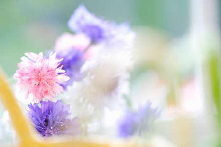 radiancy: Cornflower