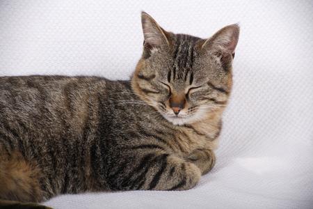 mammalian: Rest of cat
