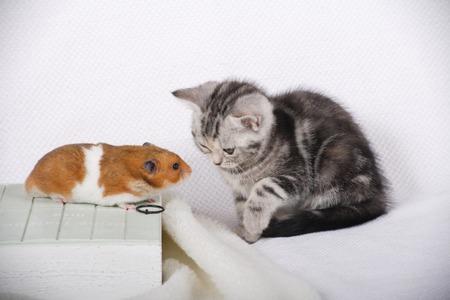 mammalian: The cat and Hamster