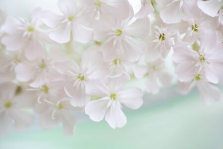radiancy: White flowers Stock Photo