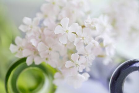 reviving: White flowers Stock Photo