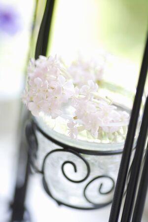 radiancy: White flowers Stock Photo