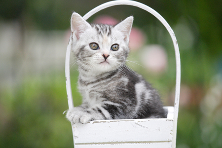 living organisms: The cat Stock Photo