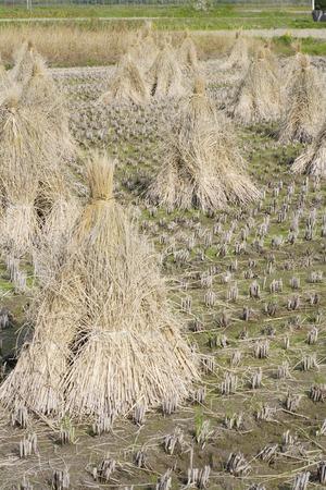 living idyll: Dried straw