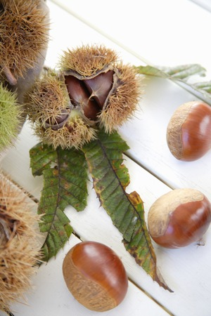 splinter: Chestnut