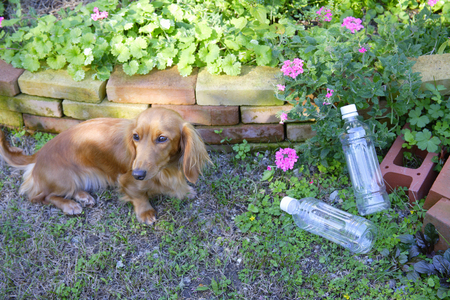 pet flasche: PET bottles and dogs Lizenzfreie Bilder
