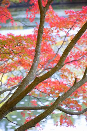 waterside: Autumn of waterside Stock Photo