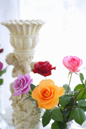 angel roses: Rose