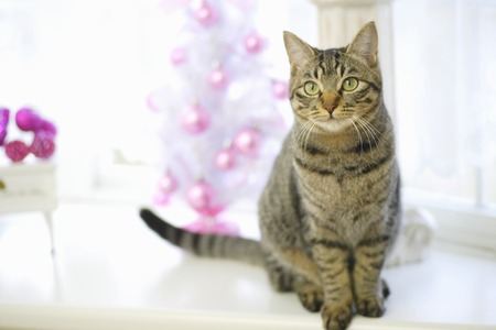 Cats and Christmas photo