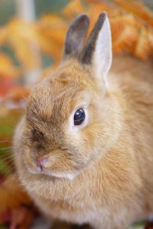 mammalian: Rabbit fall
