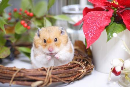 hamsters: Hamsters Christmas