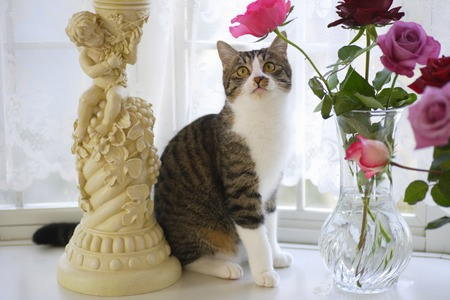 living organisms: Cats and roses