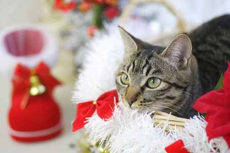 living organisms: Cats and Christmas