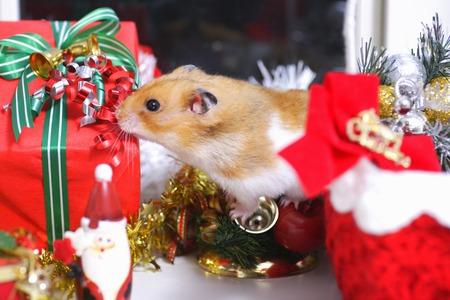 Hamsters Christmas photo