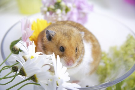 living organisms: Spring of the hamster