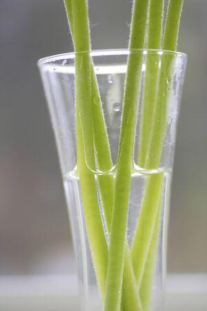 ガーベラの茎 写真素材