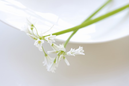 neatness: Spring Flower Arum Stock Photo