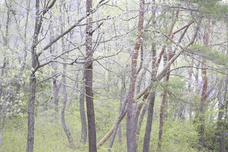 figurative: Figurative wooded area