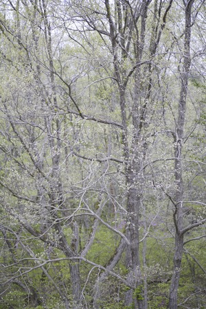 formative: Figurative wooded area