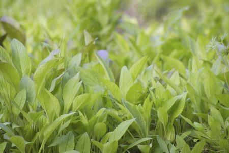 greengrass: Greengrass