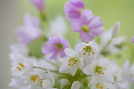 small flower: Small flower Arum and okisaris bouquet