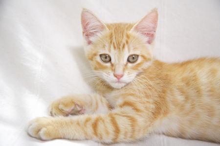 loosen up: Kitten relax