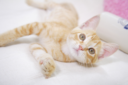 lie down: Lie down and playing with a kitten