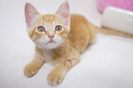 loosen: kitten to stare Stock Photo