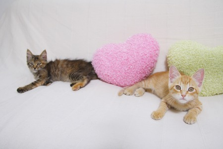 loosen up: Two kittens relaxing on the sofa