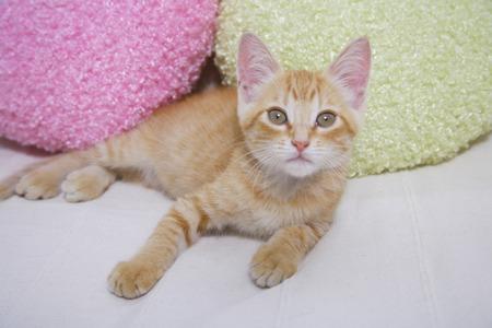 loosen up: kitten to stare Stock Photo