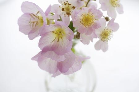 evening primrose: Evening primrose was decorated glass bouquet