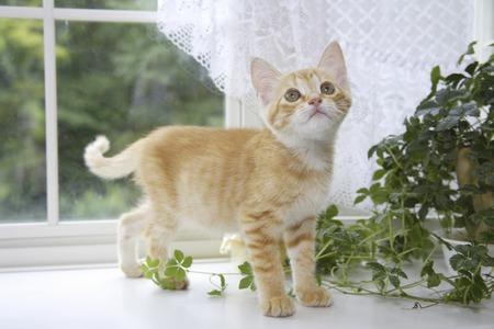 nestled: Kitten Nestled in the windowsill and Green