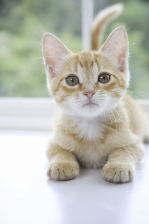 window treatments: Kitty poses in window treatments
