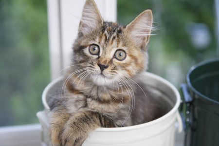 embark: Kitten you embark from in the can Stock Photo